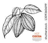 cocoa beans vector illustration.... | Shutterstock .eps vector #1309360699