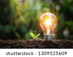 Lightbulb With Small Plant On...