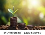 plant growing on coins sunshine ... | Shutterstock . vector #1309525969