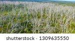 cape otway nationa park ... | Shutterstock . vector #1309635550