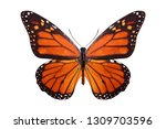 Stock photo tropical butterfly danaus plexippus isolated on white background 1309703596
