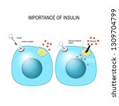 insulin acts as the key which... | Shutterstock .eps vector #1309704799