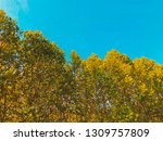 deciduous trees on the... | Shutterstock . vector #1309757809