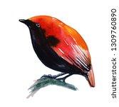 crested satinbird watercolor | Shutterstock . vector #1309760890