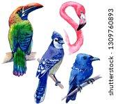 watercolor exotic birds... | Shutterstock . vector #1309760893