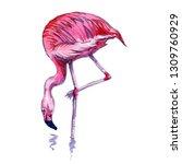 pink flamingo watercolor work. | Shutterstock . vector #1309760929