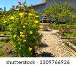 yellow cosmos flower or cosmos... | Shutterstock . vector #1309766926