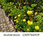 yellow cosmos flower or cosmos... | Shutterstock . vector #1309766929