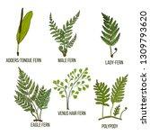 forest fern set. hand drawn... | Shutterstock .eps vector #1309793620