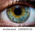 human eye blue and yellow   Shutterstock . vector #1309859110