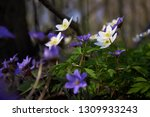 the group of the first spring... | Shutterstock . vector #1309933243