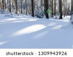 snow covered fir trees in... | Shutterstock . vector #1309943926
