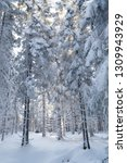 snow covered fir trees in... | Shutterstock . vector #1309943929