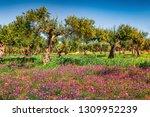 impressive spring view of... | Shutterstock . vector #1309952239