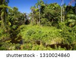 typical rain forest river...   Shutterstock . vector #1310024860