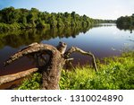 typical rain forest river...   Shutterstock . vector #1310024890