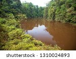 typical rain forest river...   Shutterstock . vector #1310024893