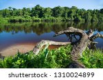 typical rain forest river...   Shutterstock . vector #1310024899