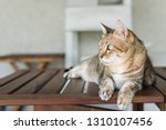 domestic tabby cat sit on the... | Shutterstock . vector #1310107456