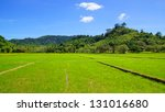 landscape with rice field. el...