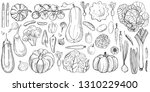hand drawn vegetables on white... | Shutterstock .eps vector #1310229400