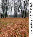 beautiful deciduous trees in... | Shutterstock . vector #1310292943