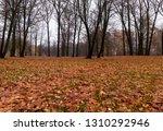 beautiful deciduous trees in... | Shutterstock . vector #1310292946