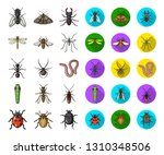 different kinds of insects... | Shutterstock .eps vector #1310348506