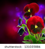 Spring Flowers Pansy Over Black....