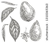 avocado set. vector hand drawn... | Shutterstock .eps vector #1310365363