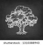 chalk sketch of oak tree on...   Shutterstock .eps vector #1310388943