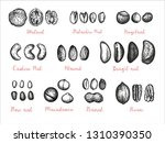 nuts big set. collection of ink ...   Shutterstock .eps vector #1310390350