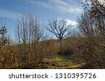 deciduous forest  part of  the... | Shutterstock . vector #1310395726
