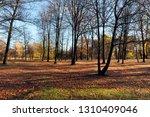 bare trees growing in autumn... | Shutterstock . vector #1310409046