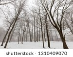 winter forest with bare... | Shutterstock . vector #1310409070