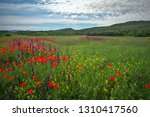 spring flowers in field....   Shutterstock . vector #1310417560