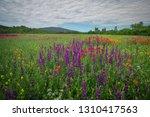 spring flowers in field....   Shutterstock . vector #1310417563