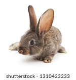 Stock photo grey baby rabbit isolated on a white background 1310423233