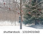 Snowy Winter Tree With Male...