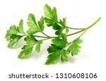 fresh flat leaf parsley herb... | Shutterstock . vector #1310608106