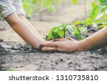 a child plants a plant in the... | Shutterstock . vector #1310735810