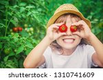 child collects a harvest of... | Shutterstock . vector #1310741609