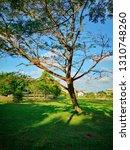 autumm nature public park and...   Shutterstock . vector #1310748260