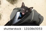baby cat kitten at koh yao noi...   Shutterstock . vector #1310865053