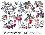 set of hand drawn berries...   Shutterstock .eps vector #1310891180