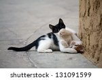 Stock photo two playing kittens 131091599