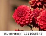close up of a purple ball... | Shutterstock . vector #1311065843