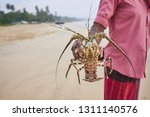 fishing in sri lanka. fisherman ... | Shutterstock . vector #1311140576