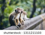 group of cute monkeys sitting... | Shutterstock . vector #1311211103