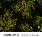 bold abstract floral pattern.... | Shutterstock . vector #1311211913